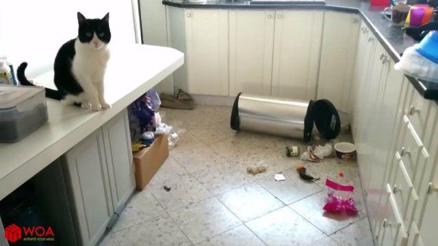 guiltycats1_e