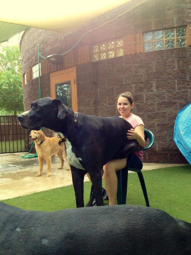 big-puppy2_e