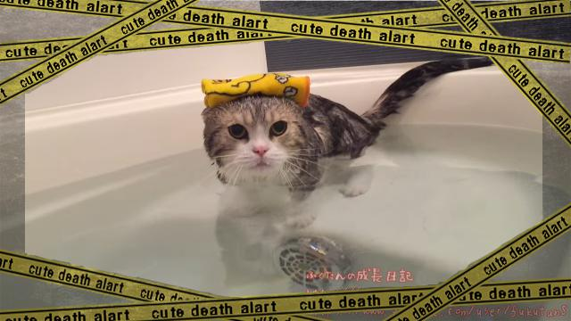 cat-5 [www-frame
