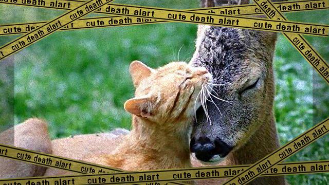catsbestfriends5_ea-frame