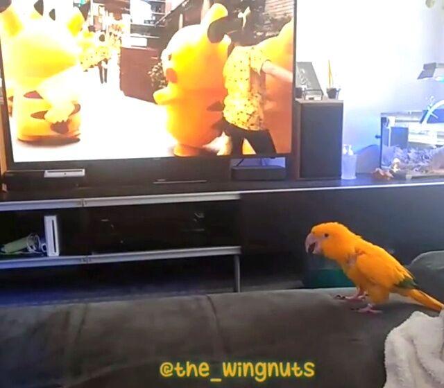 pikachu3_640