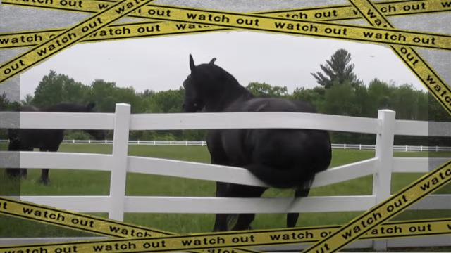 horse-f [www-frame