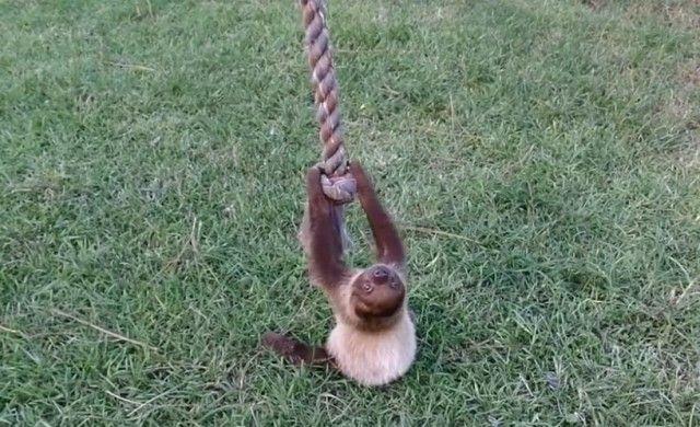 sloth0_e