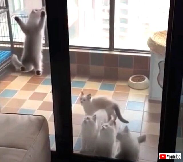funnycats5_640