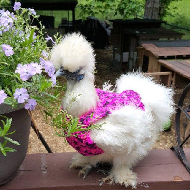 chick13_e