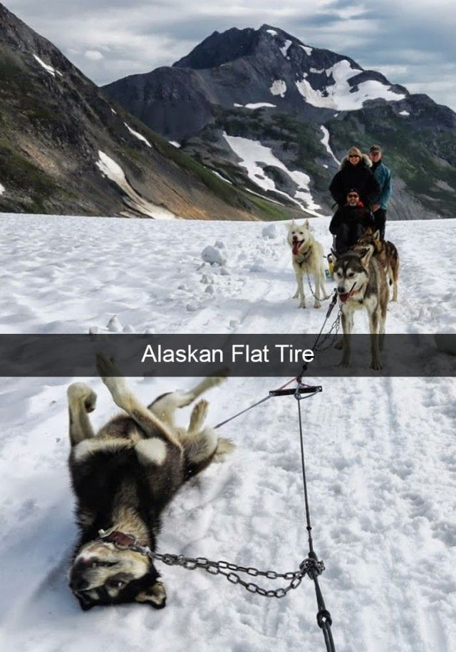 hilarious-dog-snapchats6_e