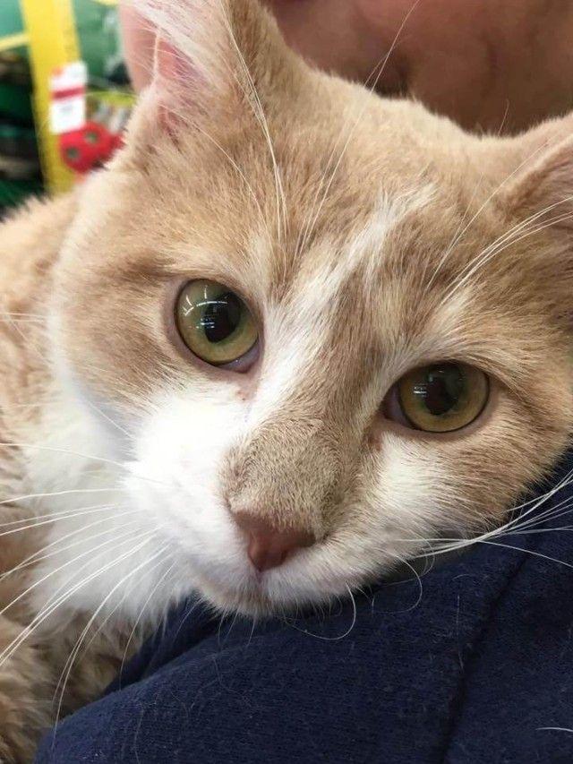 cat-4 (1)