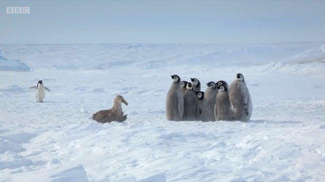 penguinchicks8_e