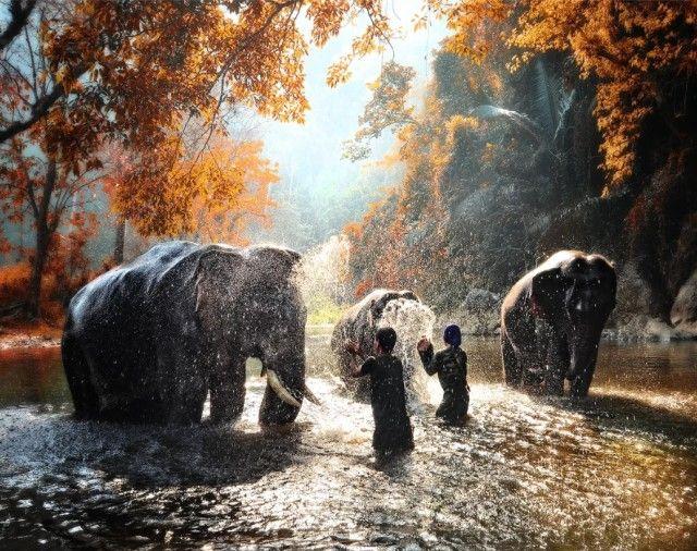 elephant1_e