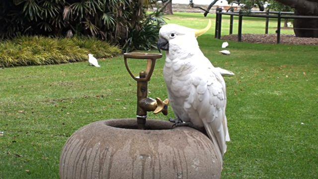 thirstybird2