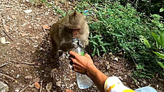 monkeywantswater5