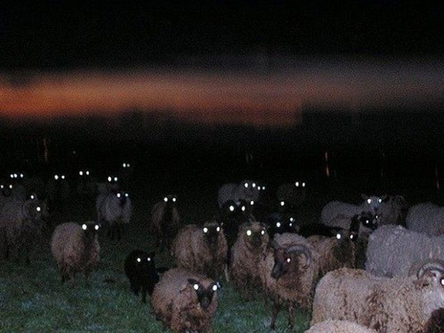 creepy-sheep4_e