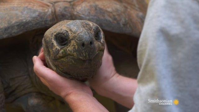 tortoises0_e
