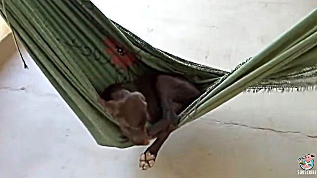 hammockdog2