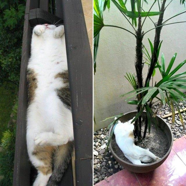 cat-plant19_e