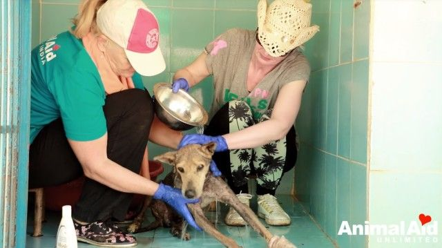 volunteeringatanimalaid16_e