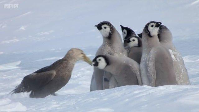 penguinchicks5_e