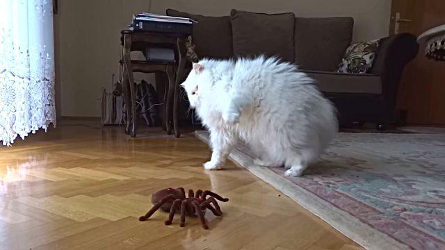 catnspider4