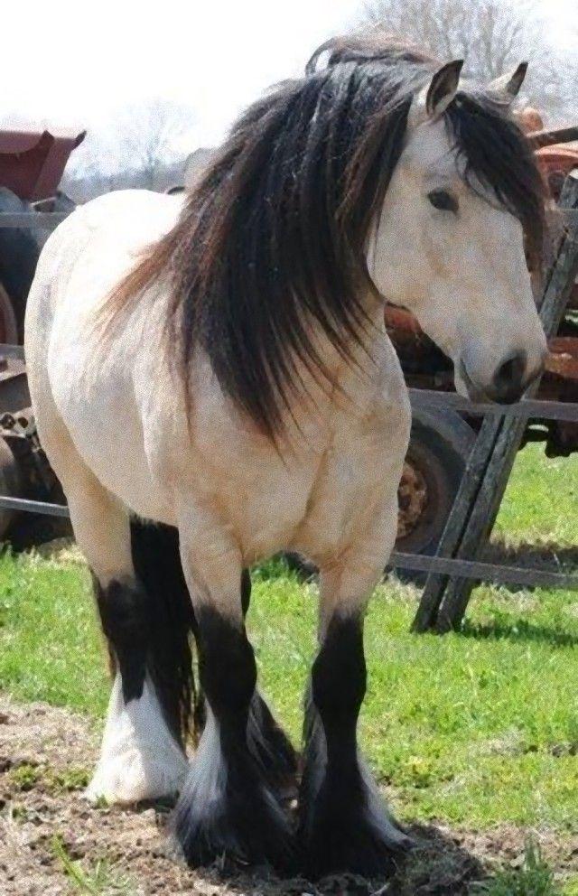 horse16_e