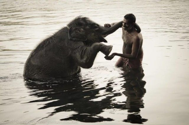 elephant8_e