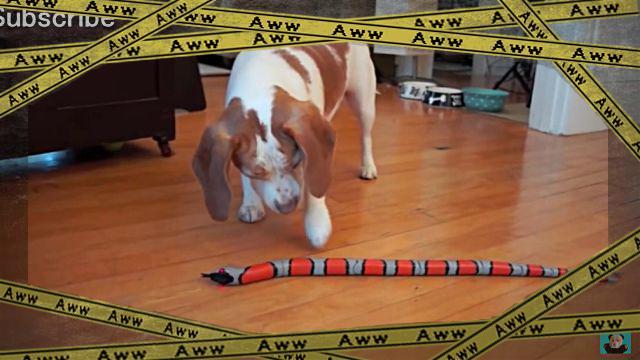 蛇のオモチャ1-frame