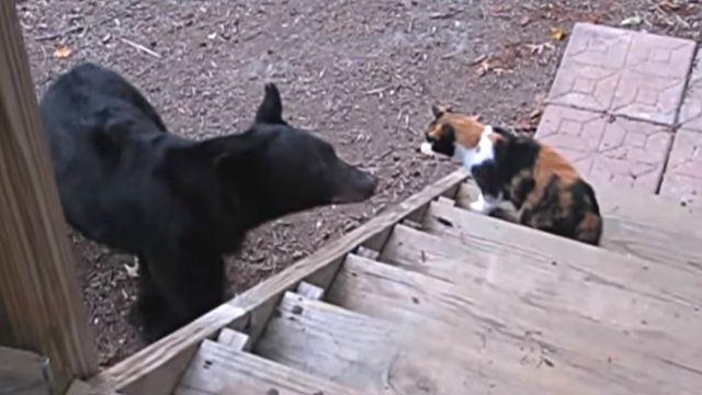 catnbear3