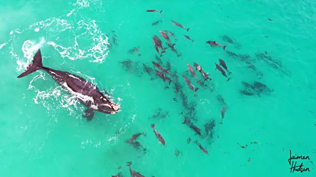 whalendolphins2