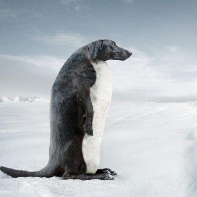 penguin1_e