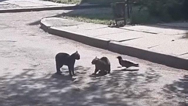 fightingcats3_e