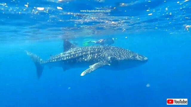 maldives4_640