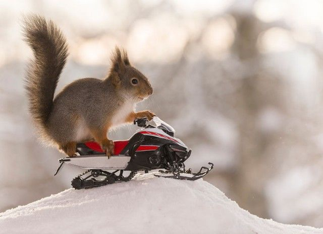 wintersportssquirrel8_e
