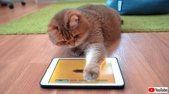 games4cats4_640