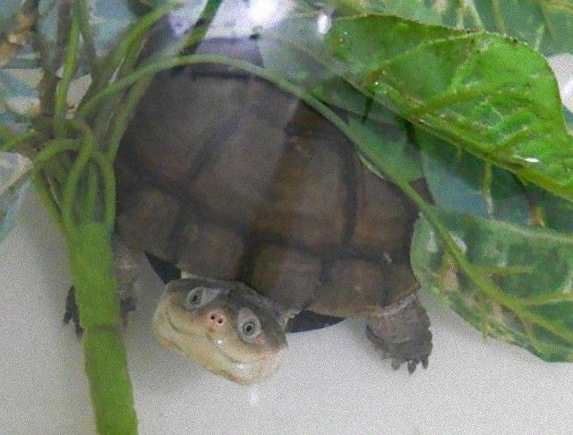 cute-reptiles-1120__605_e