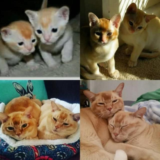 cat-7 [www.imagesplitter.net] (1)