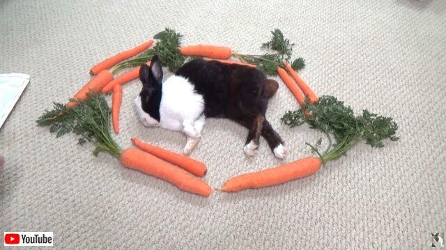 rabbitwcarrots0_640