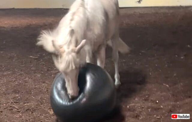 horsenball0_640