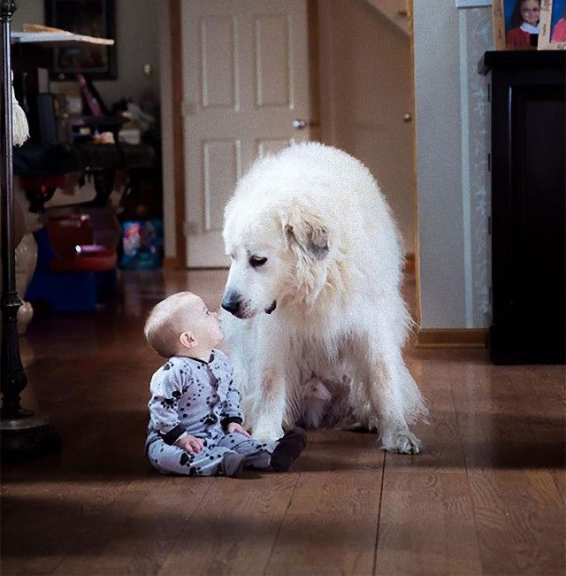 cute-kids-dogs-best-friends-friendship-14-5a97ff46d5b04__605_e