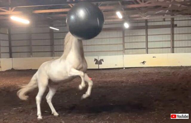 horsenball5_640