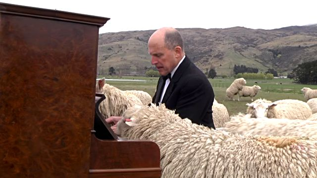 concertforthesheep1
