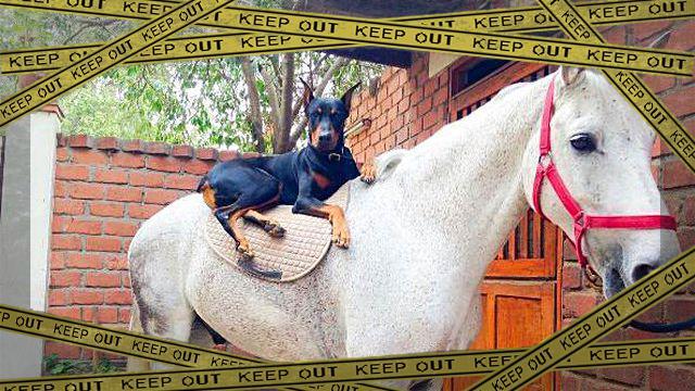 犬と馬2b-frame