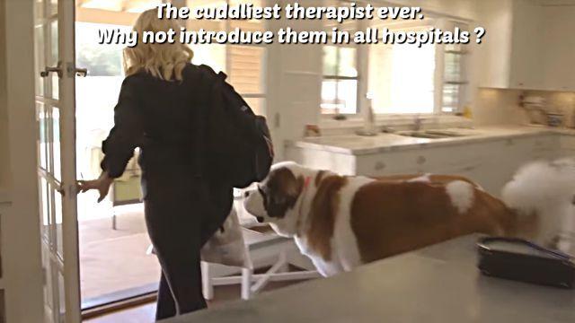 therapydog2