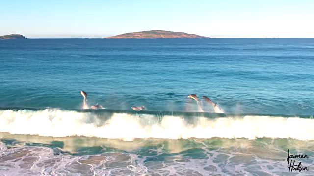 whalendolphins5