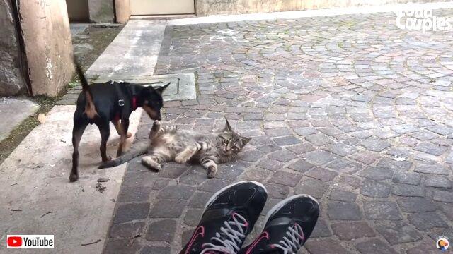 puppyadoptkitten3_640