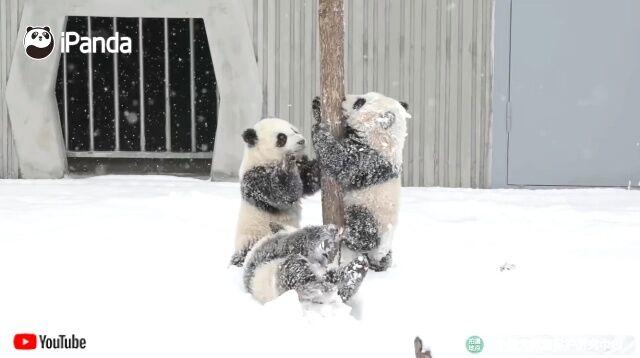 snowpandas4_640