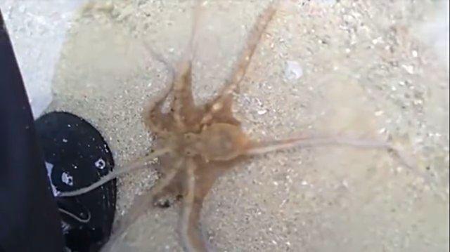 octopusthanksman2_e