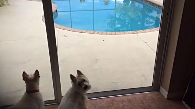 pooldog2