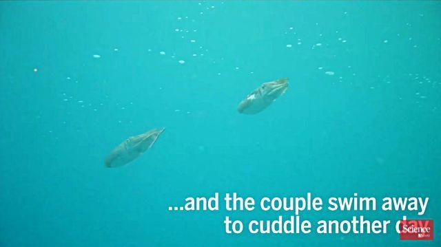cuttlefish10