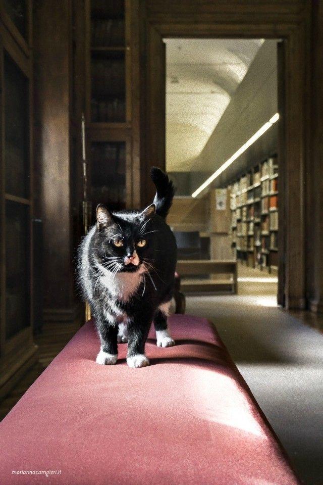 ravenna-library_e