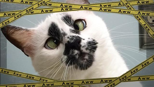 cat-4_e-frame
