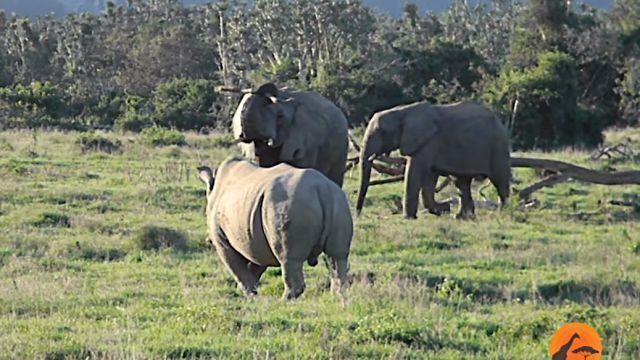 elephantnrhino3
